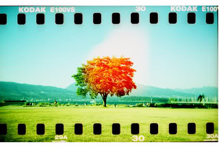Tree Filmstrip